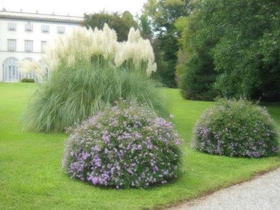 Villa Grabau : piante nel giardino