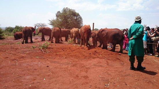 Dream Kenya Safaris: פילים