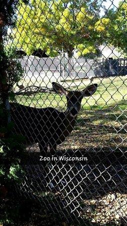 Ochsner Zoo: Deer at Zoo