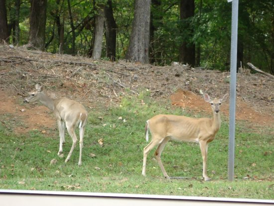 Joe Wheeler State Park : Family of deer welcoming you to Park