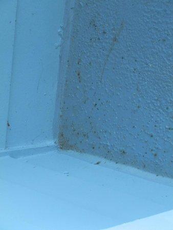 Hampton Inn & Suites Outer Banks/ Corolla: Bug Yuk