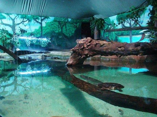 Aquario de Sao Paulo - Picture of Sao Paulo Aquarium, Sao Paulo ...
