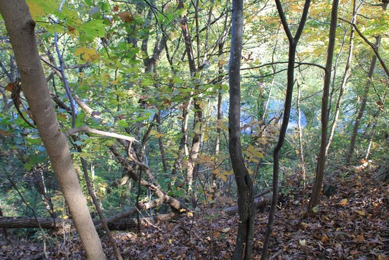 Ball's Bluff Battlefield Regional Park: Looking down toward the river