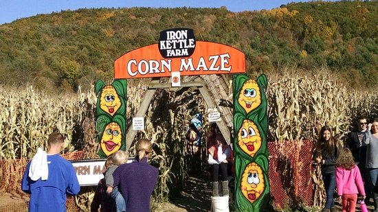 ‪‪Candor‬, نيويورك: Corn maze at Iron Kettle Farm.‬