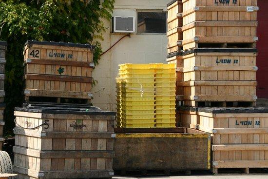 Dr. Konstantin Frank's Vinifera Wine Cellars: harvest time
