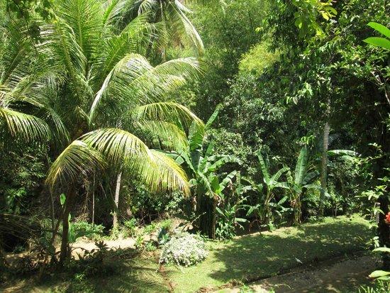 Grya Sari - the Bali Hot Springs Hotel: beau coin de jungle