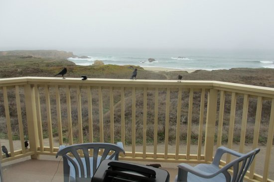Ocean View Lodge: Our balcony friends and view