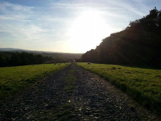 Scotchcoulthard Self-Catering Holiday Cottages: View from the top of the drive
