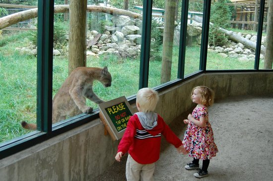 """Maine Wildlife Park: """"Please do not tap or bang on the glass!"""""""