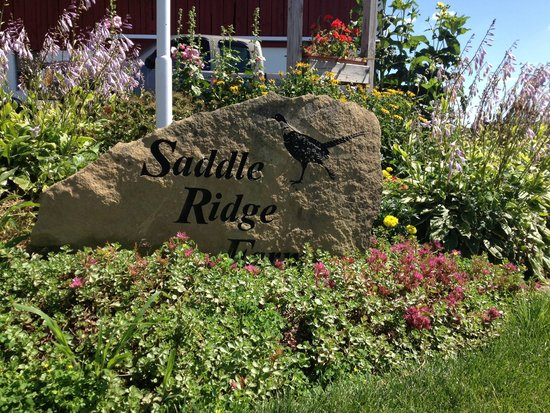 Saddle Ridge Bed and Breakfast : Entry