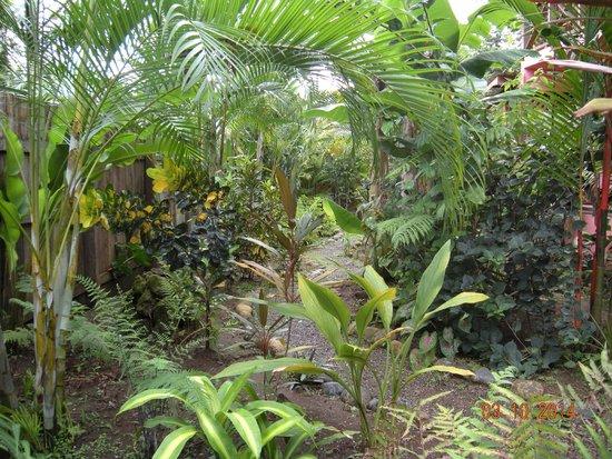 Coconut Love Beach House : Garden