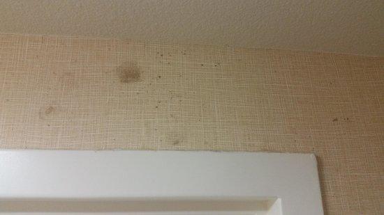 Residence Inn Camarillo: mold on walls
