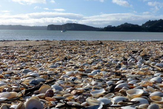 Mercury Bay - beaches with seashells