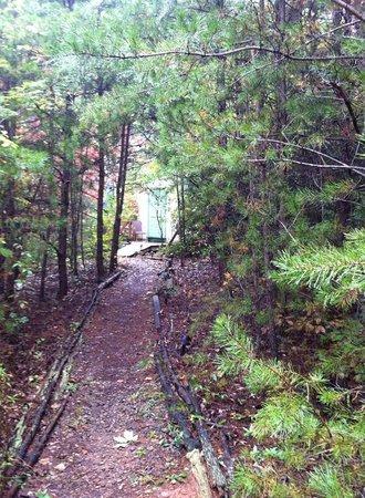 Cedar House Inn & Yurts : Path to yurt