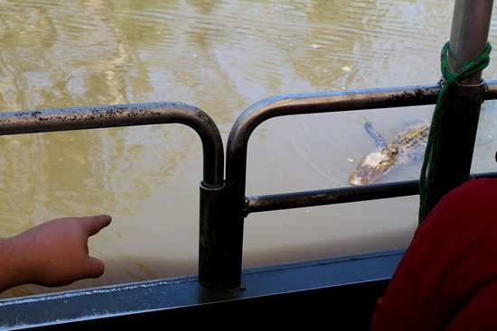 Dr. Wagner's Honey Island Swamp Tours: Pointing out gators