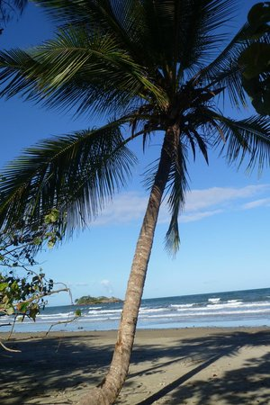 Thornton Beach Bungalows: Thornton Beach palm