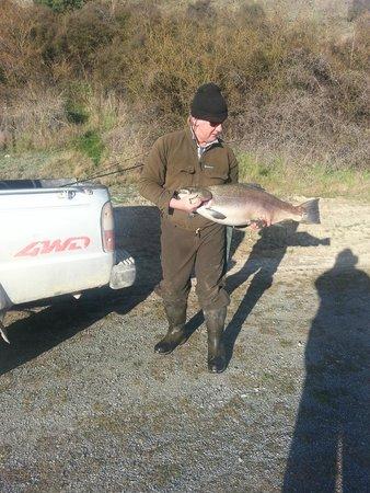 Aspen Court Motel - Twizel: A 42-pound Brown trout that did not get away.