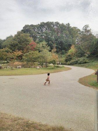 Matsumoto Alps Park : 10/12 森の入口付近