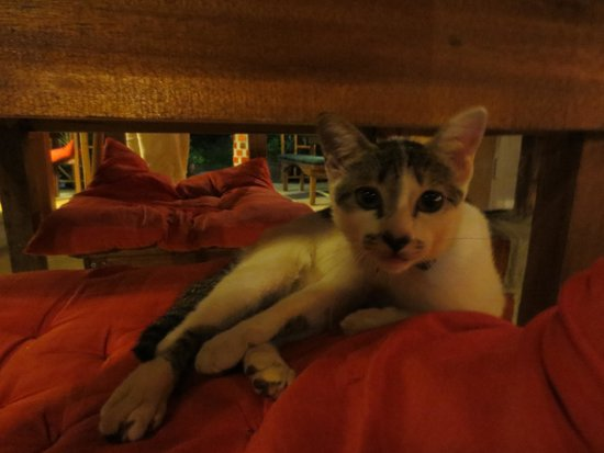 Rusty Pelican: super cute cat named Gomez