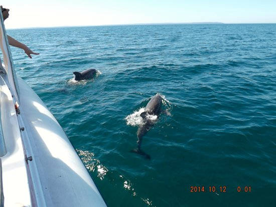 Dolphin Watch Cruises: getting ready to dive..