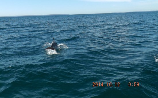 Dolphin Watch Cruises: food time..