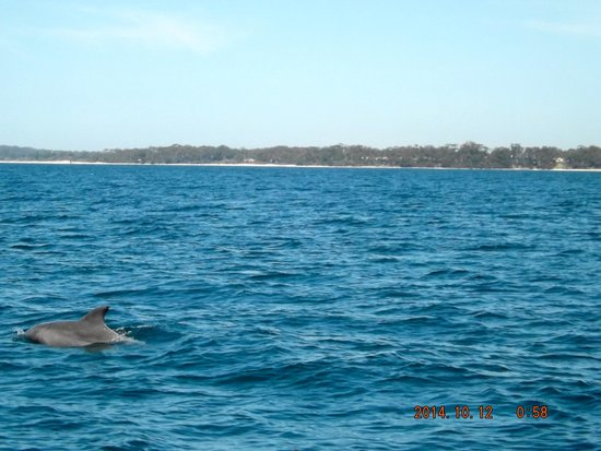 Dolphin Watch Cruises: just getting some air.