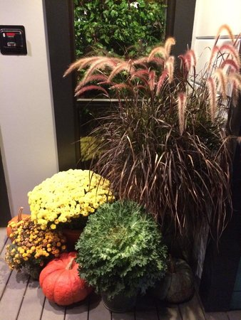 Hope and Olive: Fall Decor at the Front Door