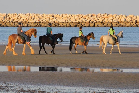 Exmouth Cape Horses