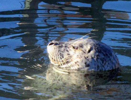 The Tides Wharf Restaurant: View of Seals, Tides Wharf & Restaurant, Bodega Bay, Ca