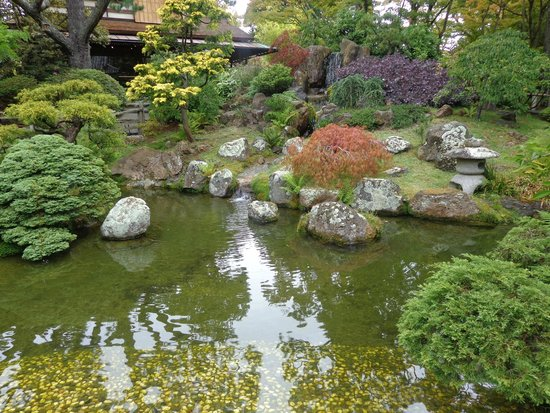 Pleasant Experience Picture of Japanese Tea Garden San