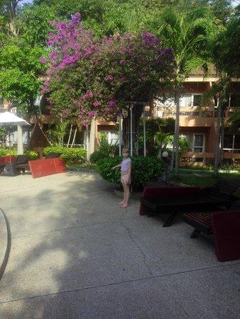 Loma Resort & Spa: возле бассейна