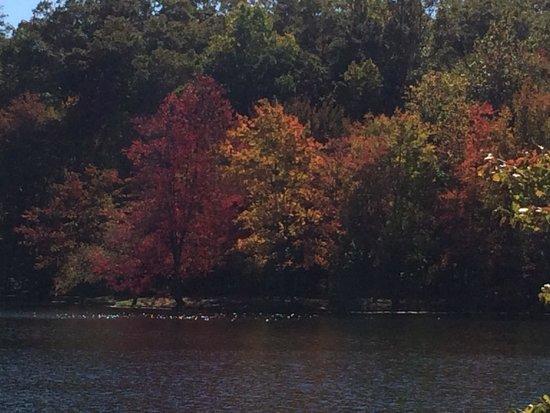 Lake in Wood Resort: Foliage