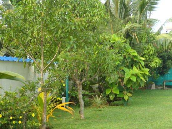 Blue Waters Cherai : the lawn near the pool
