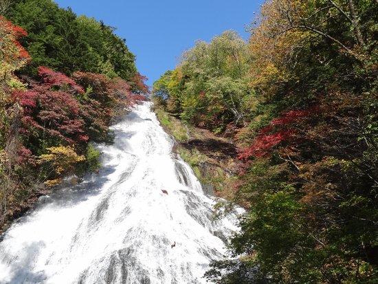 Yutaki Waterfall : 観瀑台から、滝中の木が赤く色づいてます
