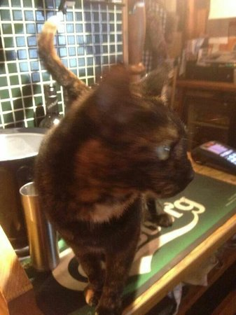 Warwickshire, UK: This is a pub where it allows cats on the bar.. just look at the spirit measures next to it. It