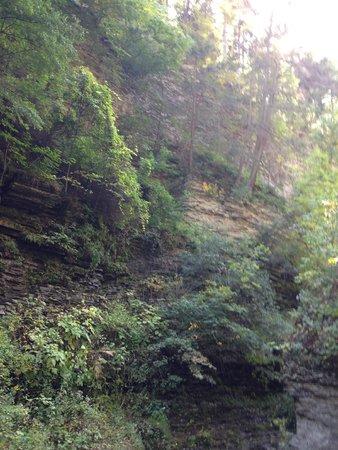 Watkins Glen State Park Campground: rocky forest