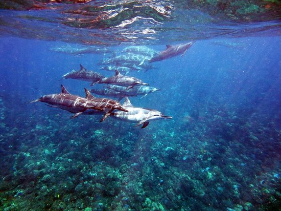 Lahaina Divers: Dolphins in Lanai