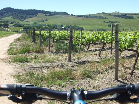 Bikes 'n Wines : Cycling En Route