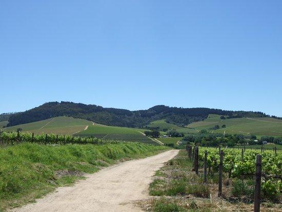 Bikes 'n Wines : Views of the Stellenbosch Valley