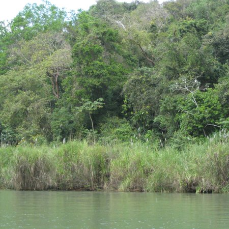 Gatun Lake: Jungle in Lake Gatun