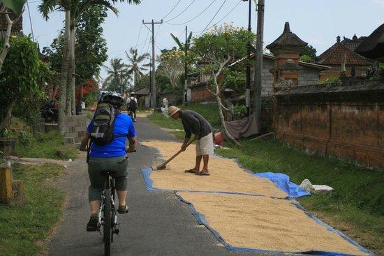 Bali Bintang Tour: Riding through village at Rice drying season.