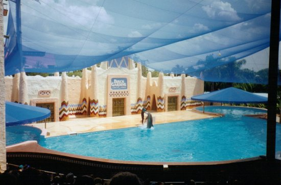 busch gardens tampa vacation packages. dolphin show at busch gardens tampa vacation packages