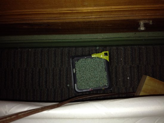 Shaver Lake Village Hotel : rat deacon