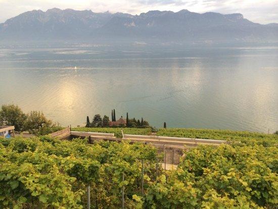 Domaine du Burignon: Overlooking the vineyard