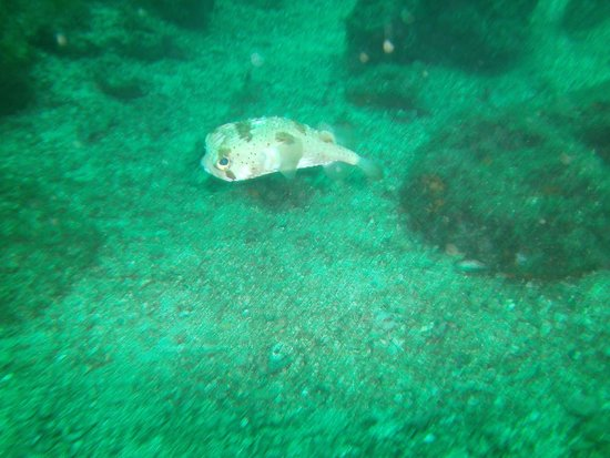 Rocket Frog Divers: fish