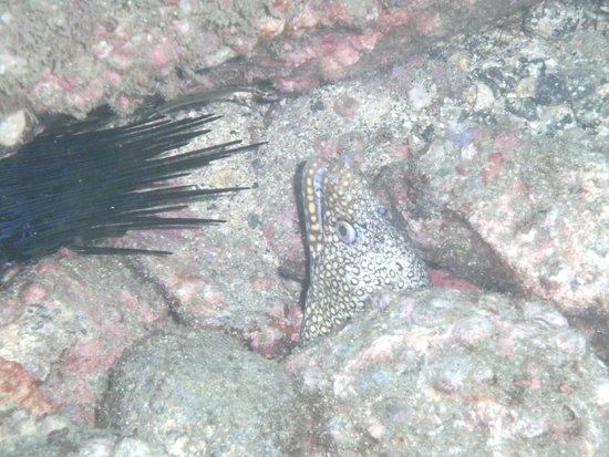 Rocket Frog Divers : eel