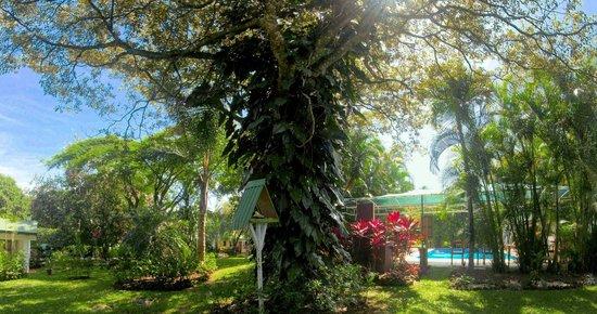 Hotel La Rosa de America: Central Garden