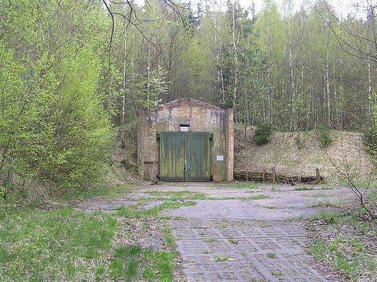 Taucherwald
