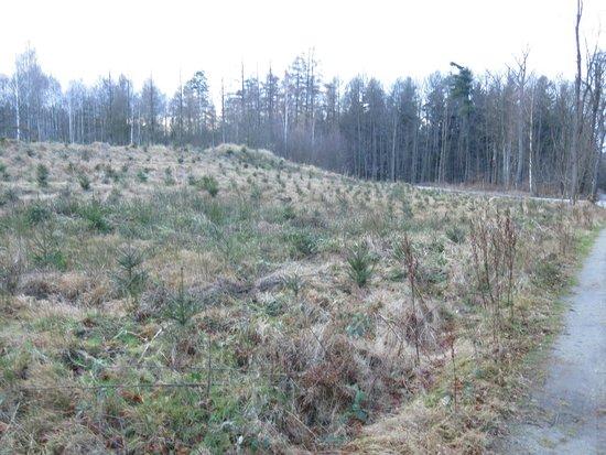 "Burkau, Germany: Место, где засыпан металлический бункер ""Панцирь"" - командный пункт ракетного дивизиона"