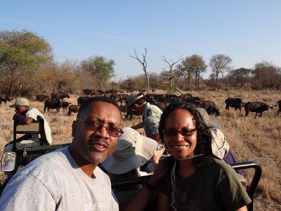 Gomo Gomo Game Lodge: Buffalo herd